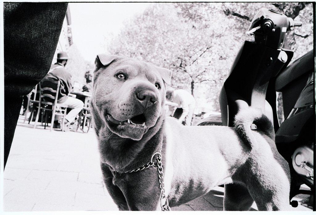 hond.jpg